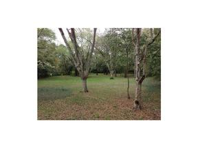 Property for sale at 5308 OLD SHELL ROAD, Mobile,  AL 36608